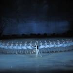 """""""Il Lago dei Cigni"""" al Teatro San Carlo di Napoli dal 17 settembre 2013"""