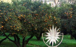 Festa del Mandarino dei Campi Flegrei – VII edizione, il 13 ed il 14 dicembre 2018 al Complesso Monumentale di San Lorenzo Maggiore di Napoli